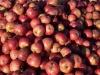 dragonorchard-apples