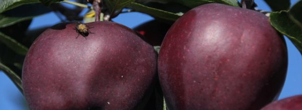 """Photographic Exhibition – """"A Fruit Farming Year: Nature and Nurture"""" May 26 – June 9"""