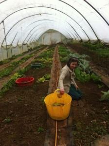 Caroline Handley - the main grower