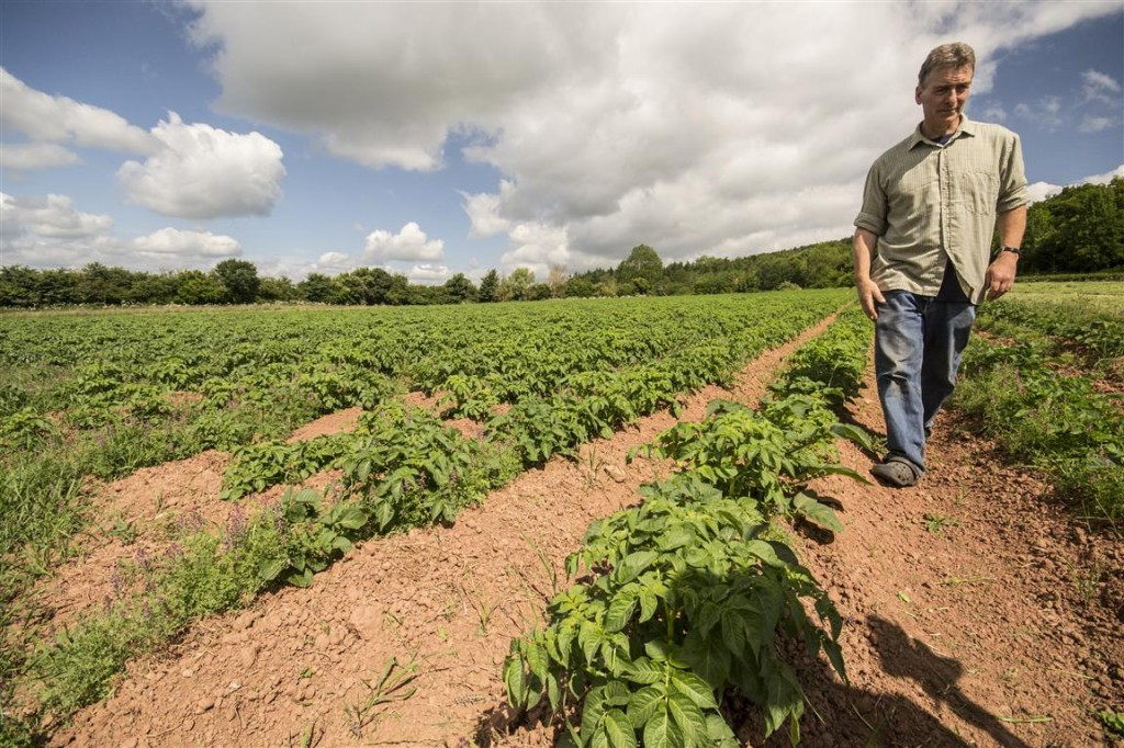 John Davenport in his potato field