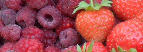 June Recipe: Raspberry and Cinnamon Torte with Raspberry Sauce
