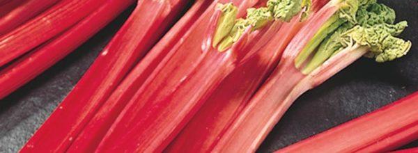 February Recipe: Ginger Rhubarb Sponge