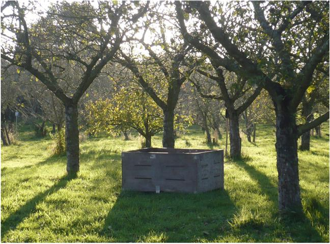 dragonorchard