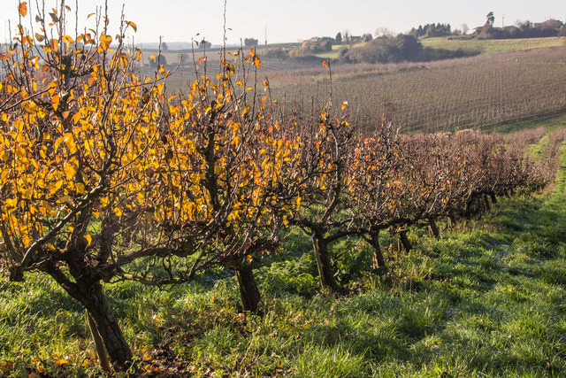 Orchard in winter at Castle Fruit Farm by Pat Strauss