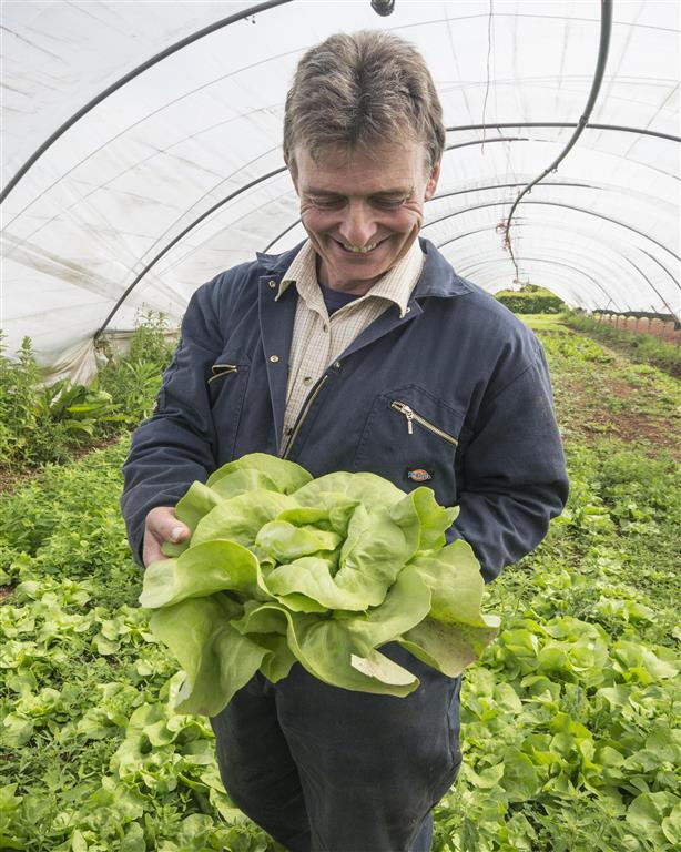 John Davenport with lettuce