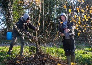 Pruning at Castle Fruit Farm by Pat Strauss